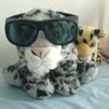 tornir: Photograph of a plushie snowleopard wearing oversized sunglasses, and her plushie leopard sister beside her. (cool 'pard)