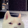 white_mage: (kissu ° ohaythar)