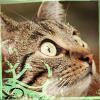 chromariver: (Tiger)