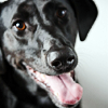 dogwalksyou: (dog: friendly)
