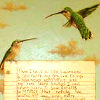 revolutions: Two hummingbirds hovering in the air above what looks like a sheet of paper with writing on (hummingbirds)
