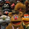 easycompany: (muppets: the gang)