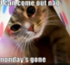bluflamingo: cat peering out saying 'u can come out now, monday's gon' (Monday's gone)