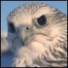 bondedgryphon: (Hmm?)