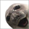 o_huallachain: (тюленька)
