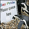 alopex_plasma: (Gay penguins)