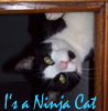 parasiticpanda: My demon kitty (Shiver)