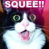 ravenmichiru: (Kitten (Squee))