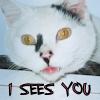 tenaya: (Spotty)
