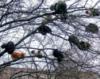 sofia_falk: (кошки на дереве)