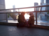 sofia_falk: (дети на закате)