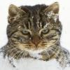 sofia_falk: (кот в снегу)
