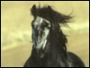 aussierose: (Horses Calendar)