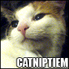 helenic: (catnip tiem :D)