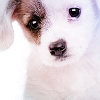 amaterasu_no_ki: (puppy!) (Default)