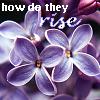 derien: (lilac)