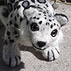 okojosan: (NF Snow Leopard 2)