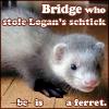 bridge_carson: (ferret!bridge)