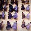 rebeccarave: (purple butterflies)