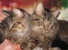 machshefa: (kitties)
