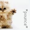 dawneh: (Cute Pounce cat)