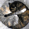 besina_sartor: Two kitties hugging during naptime (kitty butterfly)