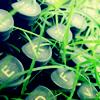 besina_sartor: typewriter keys overgrown with grass (pic#2086840)