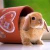 besina_sartor: small bunny hopping out from a gardening pot (bunny)