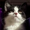 alicephilippa: (Jenny Cat)