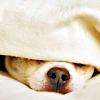 stellicidio: (image: puppy blanket)