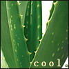 copracat: Aloe vera plant with text 'cool' (cool vera)