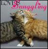 rayvyn2k: love is snuggling (Love snuggling kitties)