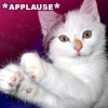 rayvyn2k: kitten applause (kitten applause)