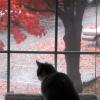 katycat: (cats - bingley autumn)