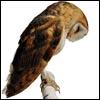 delphi: (owl)