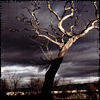 tadeusz: (Radiant Shadows - Shadow Tree)