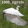 1000_egrets: (flight)