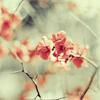 lolita: (Blossom)