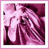 aliritchie: (pink)