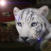 shadowcat: ([Animal] Snow Tiger)