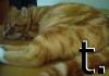 tufftaffaty: (cat of t.)