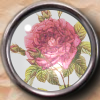 ldhenson: (redoute rose glass button)