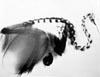 dodont: (kiwi x-ray)