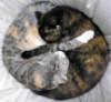 aleecat: (kitty ying n yang)