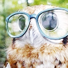 puchuupoet: (hipster owl is better than you)