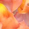 rosesinbloom: snapdragon petals (Default)