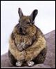 myschyf: (Buddha Bunny)