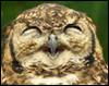 myschyf: (Giggly Owl)