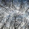 saphyria: (stark trees)
