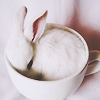 rainfall: A tiny bunny rabbit curled up in a cup. (bunny in a cup)